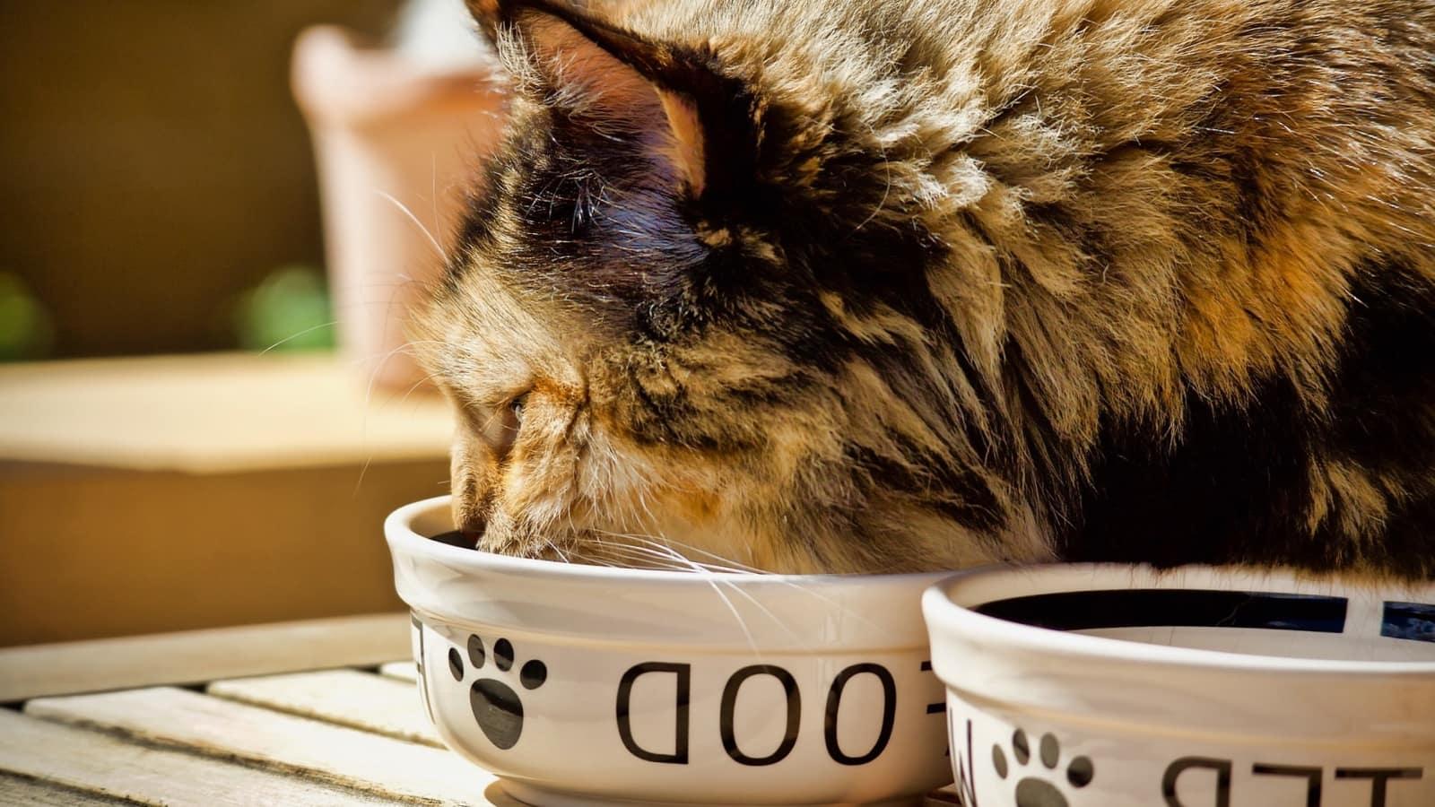 Los Mejores Piensos Para Gatos